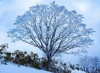 【奥伊吹】モフモフバージンスノーと戯れながらブンゲンへ2019/1/23 - 流雲 蒼穹 風に吹かれて