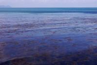 なのりその海 - Beachcomber's Logbook