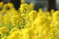 春が来た - 木洩れ日 青葉 photo散歩