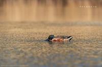 ちょっと低くした沼の風景 - Slow Life is Busy