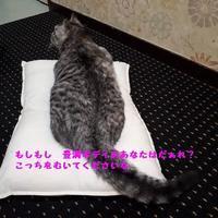 ここでは初めまして - 八幡地域猫を考える会