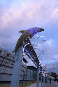 冬の夜の水族館へ - 「古都」大津 湖国から