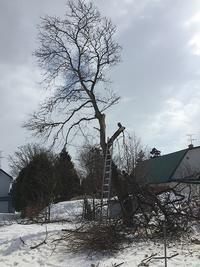 切り残しの栗の木・・やっと伐採出来ました。 - あいやばばライフ
