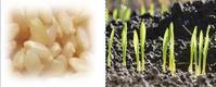 前提条件プログラム(2)原材料の取扱い - すてきな農業のスタイル