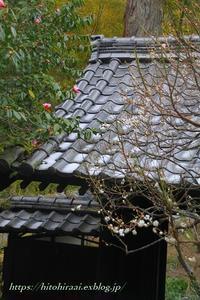 冬の北鎌倉散策編④ - 暮らしを紡ぐ