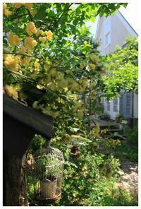 natuの4月の庭 - natu     * 素敵なナチュラルガーデンから~*     福岡で庭造り、外構工事(エクステリア)をしてます
