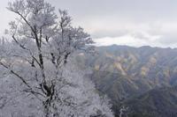 霧氷~光射す - katsuのヘタッピ風景