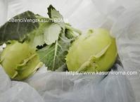 """""""「コールラビ」イタリアではじめて食べた、野菜♪"""" - 「ROMA」在旅写ライターKasumiの最新!イタリア&ローマあれこれ♪"""