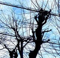 おもしろい樹の影 - のんびり街さんぽ