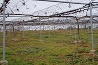 剪定が終わりました。 - ~葡萄と田舎時間~ 西田葡萄園のブログ