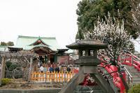 亀戸天神梅まつり - 出張撮影オレンジ公式ブログ