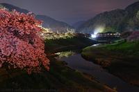 伊豆 第21回みなみの桜と菜の花まつり 1 河津桜 - photograph3