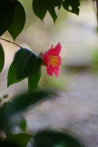 椿のプロフィール(横顔) - feel a season