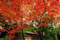 京の紅葉2018秋の上御霊神社 - 花景色-K.W.C. PhotoBlog