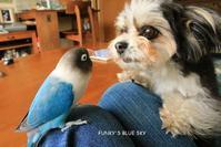B.B & Chipo*や、やられた~~~、、、、 - FUNKY'S BLUE SKY