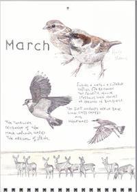 3月 春の訪れ イエスズメ、チフチャフ、サバクヒタキ、タゲリ春の花 - ブルーベルの森-ブログ-英国のハンドメイド陶器と雑貨の通販