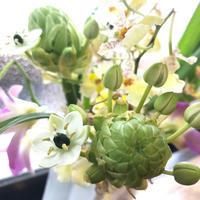 植物のパワー  (サンデルシー) - **おやつのお花*   きれい 可愛い いとおしいをデザインしましょう♪