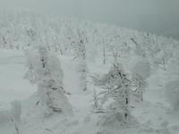 蔵王の樹氷 - tokoya3@