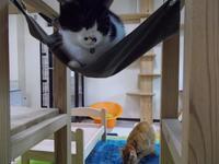 捨て猫に拾われた男 - ネコと文学と猫ブンガク