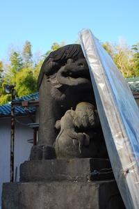 綱島・諏訪神社の狛犬さん。 - 明暮日の茶ばしら