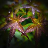 ・drop of rain water・ - - Foliage & Blooms'葉と花' pics. -