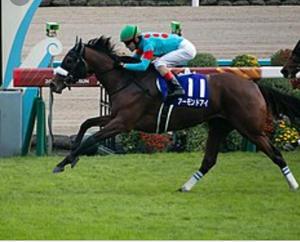ドバイワールドカップDAY鑑賞会! - ホースバーエルコン HORSE BAR ELCON