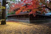2018紅葉!~上御霊神社~ - Prado Photography!