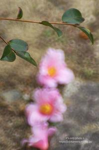 マクロdeパシャ!! -椿と山茶花- - It's only photo 2