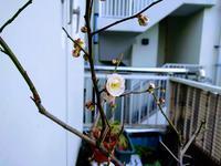 梅の花 - ゲストハウス東京