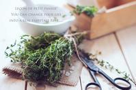 家庭にあると便利なハーブたち。 - 木曜茶会と日々の香草・薬草ノート
