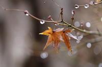 雨曜日 - ecocoro日和
