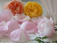 Delbard 〜 香りのピラミッド - Gardener*s Diary