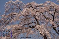 2019年3月カレンダー - ノラくんの世界Ⅱ