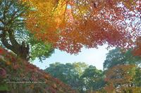 2018・Autumn*Memorys④**灯台下暗し - きまぐれ*風音・・kanon・・