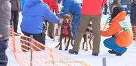JAPANCUP2019 全国犬ぞり稚内大会2日目。 - Precious*恋するカメラ