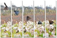 来るべき '春の妖精蝶' の撮影に向けて(2019/02/28) - 里山便り