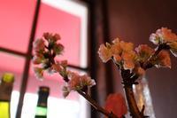 3月のサンデーランチとお休みのお知らせと。。 - 日仏食堂 ラトリエ ドゥ ヴィーブル