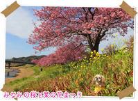 2019年2月16日南伊豆町みなみの桜と菜の花まつり - 週末は、愛犬モモと永吉、拓海とお出かけ!Kimi's Eye
