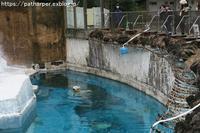 2019年2月天王寺動物園その2 Shilkaジャンプする - ハープの徒然草