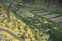 鎌倉の紅葉 - 僕の足跡