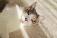 布団洗いと練乳いちごパフェ - きょうだい猫と仲良し暮らし
