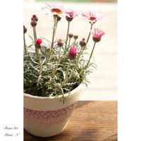 花鉢植え - BEAN ART
