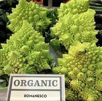 新しい野菜ロマネスコと冬に逆行の日々 - NYからこんにちは