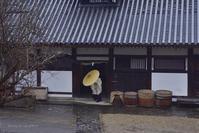 春の雨@ 1268回修二会 寸景-1 - 東大寺が大好き