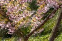 3月 - 撃沈風景写真