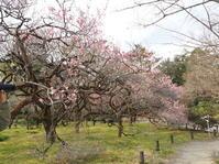 京都府立植物園に行きました。 - 家暮らしノート