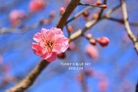 梅**と白鳥 - FUNKY'S BLUE SKY