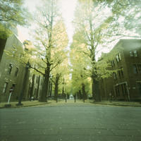 Accumulation of light -銀杏のころ- - jinsnap_2(weblog on a snap shot)