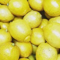 瀬戸内海 中島産 レモン入荷してます! - さにべるスタッフblog     -Sunny Day's Garden-