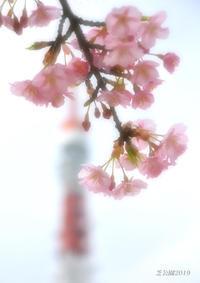 桜の背景は これ! - 写愛館